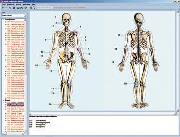 Skelett, Muskulatur und Bewegungsapparat des Menschen | LMS ...