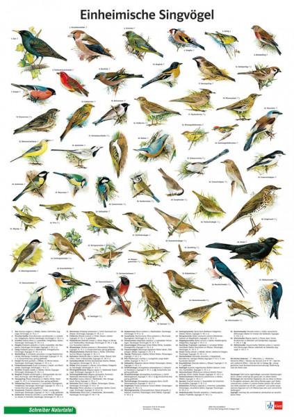 Naturtafel: Einheimische Singvögel
